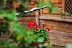 Красивые красные цветки в acient городе стоковое изображение
