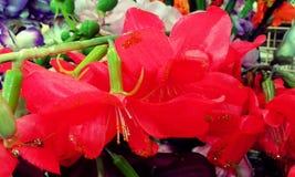 Красивые красные цветки Стоковые Изображения RF