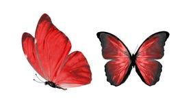 Красивые 2 красных бабочки изолированной на белой предпосылке стоковая фотография rf