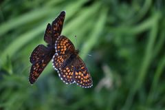 Красивые красочные бабочки на цветке Стоковое Изображение RF