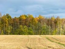 Красивые красочные деревья, ноябрь стоковые изображения rf
