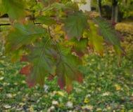 Красивые красочные лист дерева Стоковая Фотография