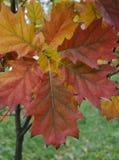 Красивые красочные лист дерева Стоковое фото RF