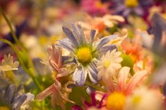 Красивые красочные поддельные цветки для предпосылки Стоковые Фото