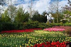 Красивые красочные тюльпаны растя в парке на солнечном дне стоковые изображения rf