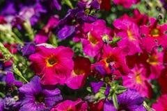 Красивые красочные цветки весны Стоковые Фотографии RF