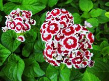 Красивые красочные цветки в парке, Литве Стоковые Изображения