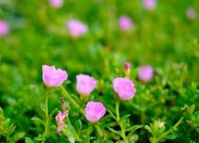 Красивые красочные цветки в саде Стоковая Фотография RF