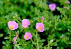 Красивые красочные цветки в саде Стоковые Изображения