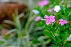 Красивые красочные цветки в саде Стоковое Изображение