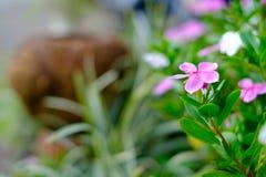 Красивые красочные цветки в саде Стоковые Фотографии RF