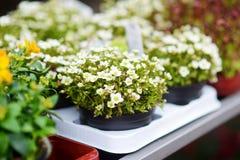 Красивые красочные цветки проданные в внешнем цветочном магазине Стоковые Фото