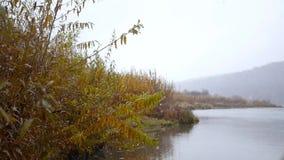 Красивые кусты желтого цвета осени на банке реки на предпосылке гор в тумане, замедленном движении сток-видео