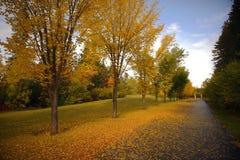 Красивые ландшафты осени или падения Калгари, Канады стоковые фото