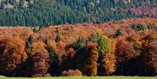 Красивые леса провинции Беллуно, Col Indes, в Alpago стоковые фото