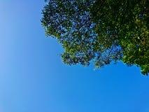 Красивые листья зеленого цвета и предпосылка голубого неба Стоковое Фото
