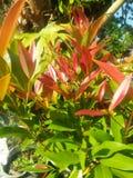 красивые листья стоковые фото