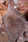 Красивые лист осени предусматриванные с концом изморози вверх стоковые фотографии rf