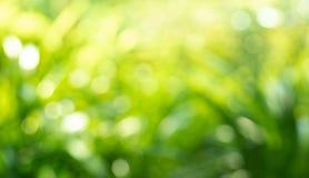 Красивые лист растительности нерезкости в идеях предпосылки forestnature стоковое изображение
