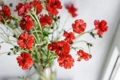 Красивые лютики Буш цветут в вазе на таблице Букет красного цветка Украшение дома Обои и Стоковое Изображение