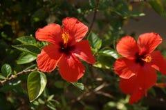 Красивые малые цветки которые представляют красоту принимать natuGrip визирования взгляда снаружи, без характера и дня Стоковая Фотография
