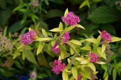 Красивые малые цветки которые представляют красоту природы Природа пышна Стоковое Изображение RF