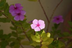 Красивые малые цветки которые представляют красоту природы Стоковая Фотография RF