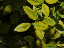 Красивые мерцающие листья порхая под глубоким, накаляя голубым небом Стоковое Фото