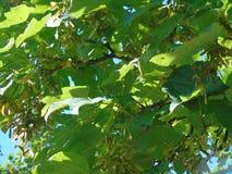 Красивые мерцающие листья порхая под темносиним небом Стоковые Изображения