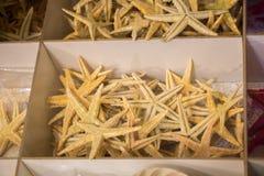 Красивые морские звёзды найденные для декоративных целей Стоковые Фото
