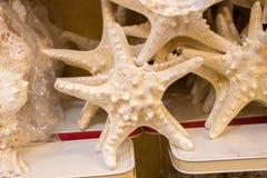 Красивые морские звёзды найденные для декоративных целей Стоковая Фотография