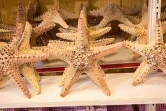 Красивые морские звёзды найденные для декоративных целей Стоковое фото RF