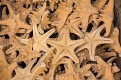Красивые морские звёзды найденные для декоративных целей Стоковое Фото