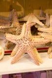 Красивые морские звёзды найденные для декоративных целей Стоковые Изображения RF