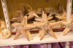 Красивые морские звёзды найденные для декоративных целей Стоковое Изображение RF