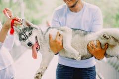 Красивые молодые пары играя с лайкой собаки в парке Summe Стоковое Изображение