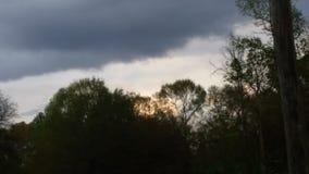 Красивые небо & деревья Стоковая Фотография