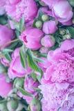 Красивые нежные розовые цветки пиона стоковое изображение rf