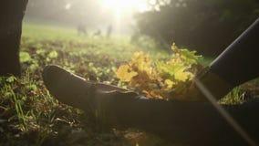 Красивые ноги женщины в листьях осени видеоматериал