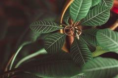 Красивые обручальные кольца лежат на деревянной поверхности Стоковые Фотографии RF