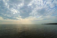 Красивые облака и заход солнца с группой в составе белая чайка Стоковое фото RF