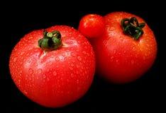 Красивые органические томаты на черной предпосылке Стоковые Фотографии RF