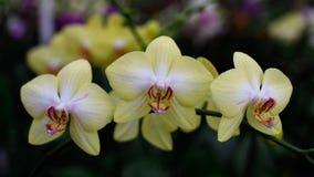 Красивые орхидеи весны Стоковые Изображения