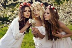 Красивые очаровательные девушки в элегантных платьях и держателе цветка стоковое изображение rf