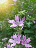 Красивые одичалые фиолетовые цветки Стоковая Фотография RF