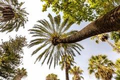 Красивые пальмы на солнечный день стоковые фотографии rf