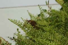 Красивые папоротники выходят зеленой листве естественная флористическая предпосылка папоротника Стоковая Фотография