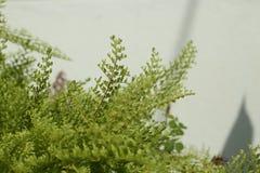 Красивые папоротники выходят зеленой листве естественная флористическая предпосылка папоротника Стоковая Фотография RF
