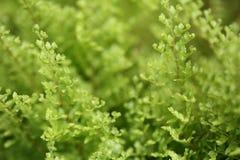 Красивые папоротники выходят зеленой листве естественная флористическая предпосылка папоротника Стоковые Изображения RF