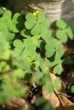 Красивые папоротники выходят зеленой листве естественная флористическая предпосылка папоротника Стоковые Фото